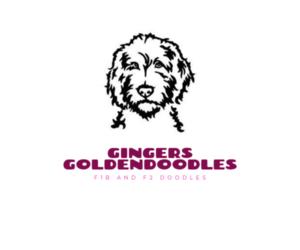 Main photo of Goldendoodle Dog Breeder near N HIGHLANDS, CA, USA