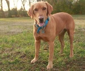Main photo of Labradoodle Dog Breeder near AUBURNTOWN, TN, USA