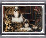 Shih Tzu Breeder in MOORE, SC, USA