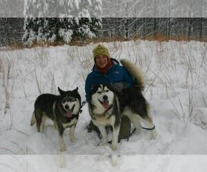 Siberian Husky Breeder in LORE CITY, OH