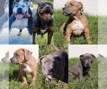 Small Photo #1  Breeder Profile in DELTONA, FL, USA