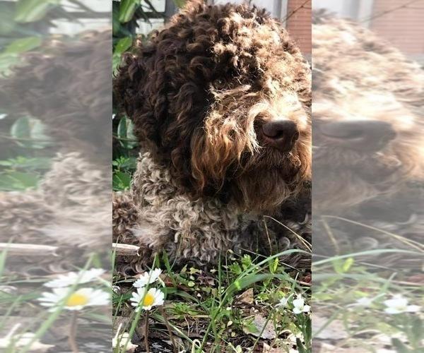 Medium Photo #3  Breeder Profile in AGUA DULCE, CA, USA