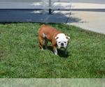 Small #11 Breeder Profile image