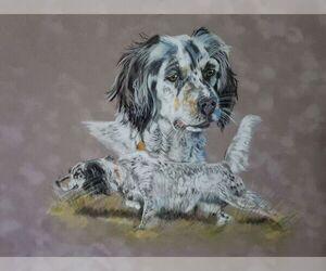 Llewellin Setter Dog Breeder in PONDER,  USA
