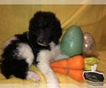 Small Photo #1  Breeder Profile in BELLA VISTA, AR, USA