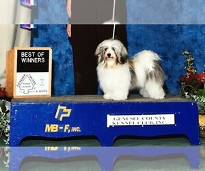 Main photo of Havanese Dog Breeder near MBORO, TN, USA