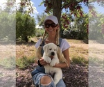 Small Photo #14  Breeder Profile in GLENDALE, CA, USA