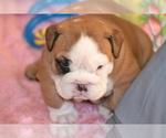 Small #26 Breeder Profile image