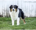 Small Photo #15  Breeder Profile in ROBERTS, IL, USA