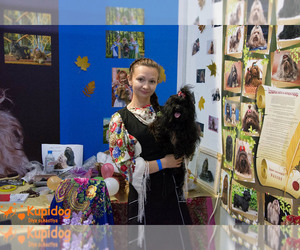 Main photo of Russian Tsvetnaya Bolonka Dog Breeder near Sergiyev Posad, Moscow Oblast, Russia