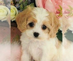 Small Photo #22  Breeder Profile in LISBON, OH, USA
