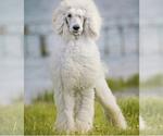 Small #14 Breeder Profile image