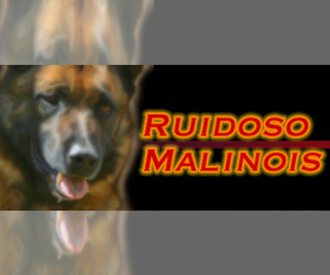 Main photo of Belgian Malinois Dog Breeder near CAPITAN, NM, USA