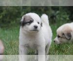 Small #7 Breeder Profile image