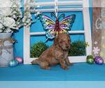 Small #66 Breeder Profile image