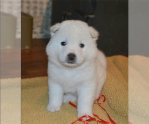 Main photo of Akita Dog Breeder near COLLINSVILLE, OK, USA