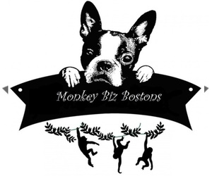 Main photo of Boston Terrier Dog Breeder near GALT, CA, USA