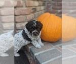 Small Photo #14  Breeder Profile in AGUA DULCE, CA, USA