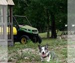 Small #41 Breeder Profile image
