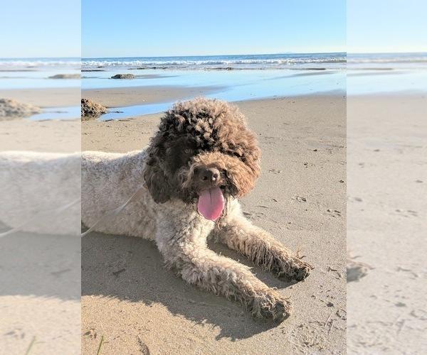 Medium Photo #36  Breeder Profile in AGUA DULCE, CA, USA