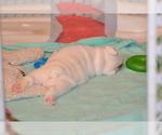 Small #34 Breeder Profile image