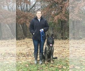 Main photo of German Shepherd Dog Dog Breeder near BAYLE, IL, USA