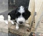 Small #31 Breeder Profile image