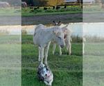 Small #52 Breeder Profile image