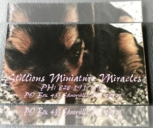 Biewer Terrier Dog Breeder near EDNEYVILLE, NC, USA