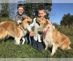 Collie Breeder in UNION GROVE, NC, USA