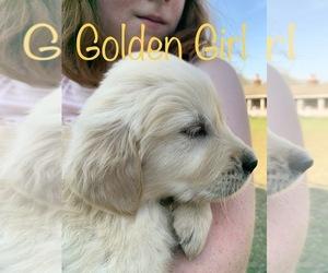 Main photo of Golden Retriever Dog Breeder near CENTER, GA, USA