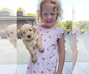 Goldendoodle Dog Breeder in AND,  USA