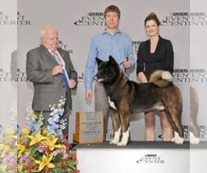 Main photo of Akita Dog Breeder near CUBA, MO, USA