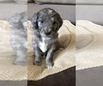 Small #54 Breeder Profile image