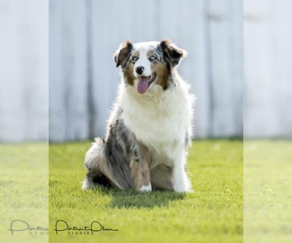 Medium Photo #12  Breeder Profile in ROBERTS, IL, USA