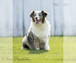 Small Photo #12  Breeder Profile in ROBERTS, IL, USA