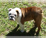 Small Photo #3  Breeder Profile in MACON, GA, USA