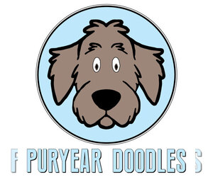 Labradoodle Breeder in PURYEAR, TN