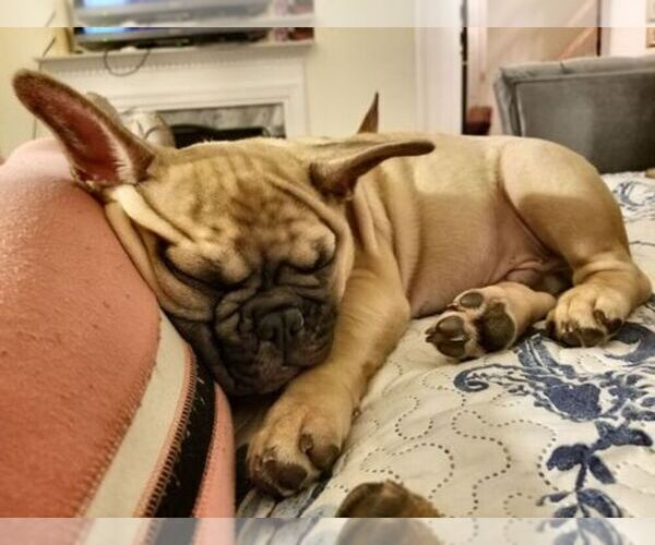 Medium Photo #7  Breeder Profile in ROCKVILLE, MD, USA
