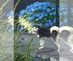 Small Photo #1  Breeder Profile in AUMSVILLE, OR, USA
