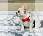 Small Photo #24  Breeder Profile in LOS ANGELES, CA, USA