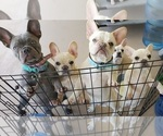 Small Photo #1  Breeder Profile in NAPLES, FL, USA