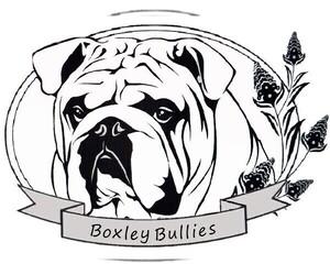 Bulldog Dog Breeder in CASSVILLE,  USA