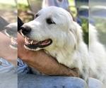 Small #25 Breeder Profile image