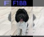 Small #38 Breeder Profile image