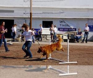 Main photo of Golden Retriever Dog Breeder near BAYARD, NE, USA