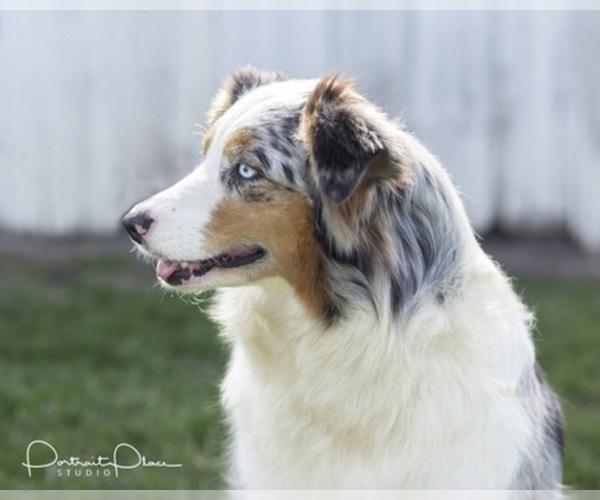 Medium Photo #10  Breeder Profile in ROBERTS, IL, USA