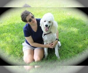 Main photo of Poodle (Standard) Dog Breeder near MBORO, TN, USA