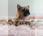 Small Photo #2  Breeder Profile in BATTLE CREEK, MI, USA