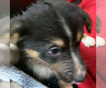 Small #12 Breeder Profile image